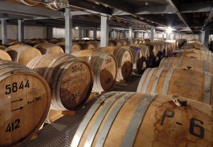 Rows of wooden cognac barrels in cellar